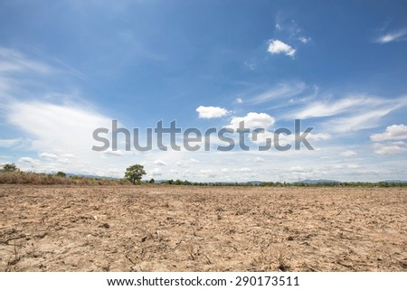 Landscape of rice field after harvest with blue sky background in the afternoon sunlight at lampoon thailand