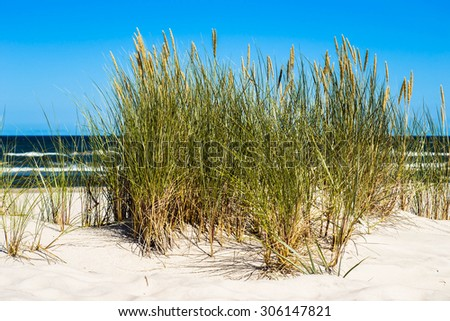 Landscape of sand dune and grass by the sea, blue sky, Leba, Baltic Sea, Poland, nature backgrounds. - stock photo