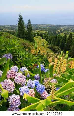 Landscape of Sao Miguel with Hydrangeas and Ginger Lilies in the foreground. - stock photo