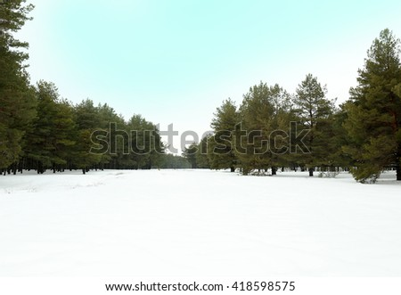 Landscape of snowy pine forest - stock photo