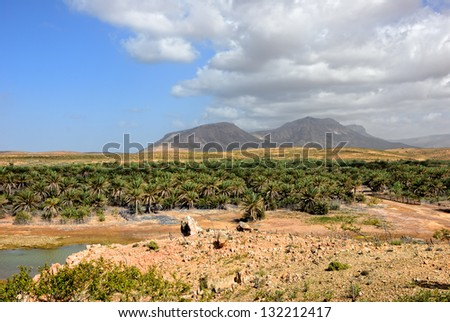 Landscape of Socotra island, Yemen. River, palm trees plantation and high mountain on background