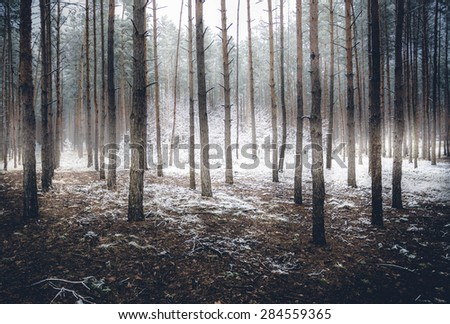 Landscape of spooky winter forest covered by mist - stock photo
