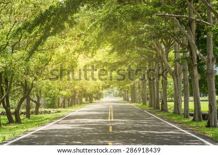 Landscape of straight road under the trees, the famous Longtien green tunnel in Taitung, Taiwan. - stock photo
