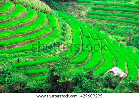 Landscape of Terrace Rice fields in Northern of Thailand