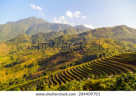 Landscape of Terraced Rice Field hill Sa Pa. Lao cai province northern Vietnam
