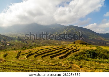 Landscape of Terraced Rice Field hill Sa Pa. Lao cai province Vietnam