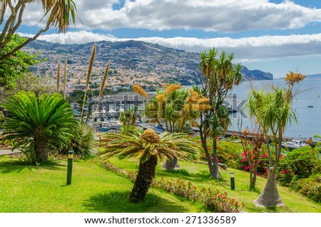Landscape of the city of Funchal on the background of exotic trees. Madeira, Portugal. - stock photo