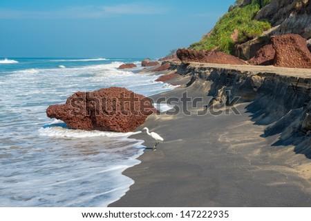 landscape of the coast with a white bird of Varkala. India, Kerala - stock photo