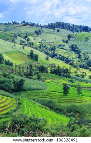 Landscape of the lined Green terraced corn and rice field on the mountain