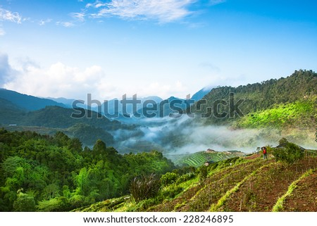 Landscape of the tea plantations early morning sunrise with fog in Doi Ang Khang,Chiang Mai,Thailand - stock photo
