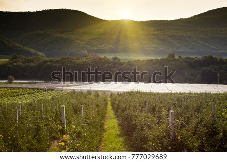 Landscape of the vineyards of the Trentino Alto Adige in Italy. The wine route, Lake Caldaro