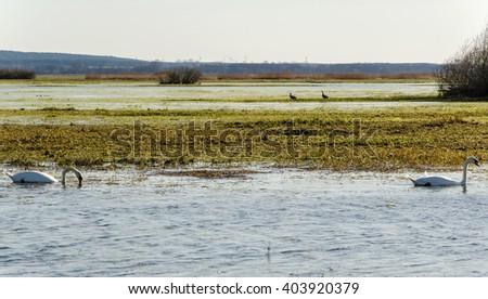 Landscape of the Warta River Mouth National Park, Poland