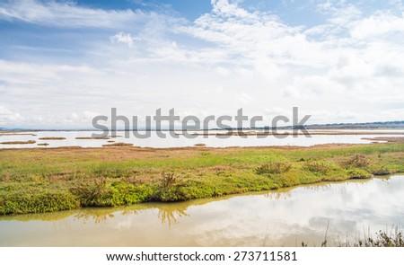 Landscape of the wetland Diaccia Botrona, Italy - stock photo