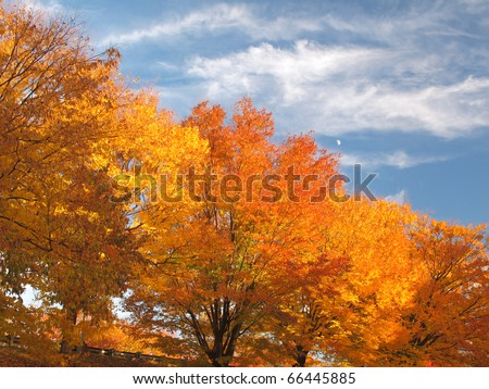 Landscape of trees in brilliant Fall Foliage against a blue sky and daylight moon - stock photo