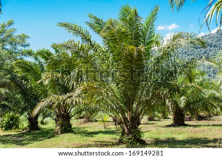 Landscape of tropical plants with lush green foliage - stock photo
