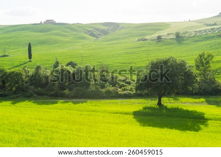 Landscape of Tuscany Italy - stock photo