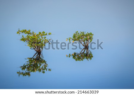 Landscape of two solitary mangrove trees beginning to grow - stock photo