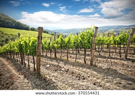 landscape of vineyard and summer  - stock photo