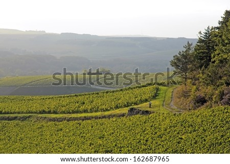 Landscape of vineyards near of Auxerre (vines of Chablis Burgundy France)  - stock photo