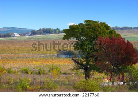 Landscape of vineyards on a slope of a hill - stock photo