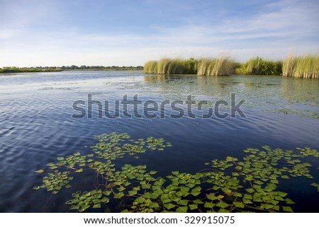 Landscape of water and grass in the Okavango Delta in North of Botswana. The Delta is the biggest sweatwater reservoir in this area and the water is absolutely clean - stock photo