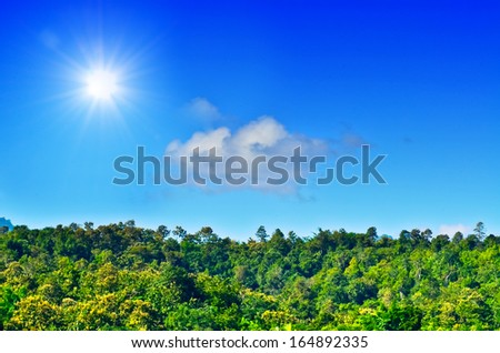 landscape of young green forest with  blue sky and sun - stock photo