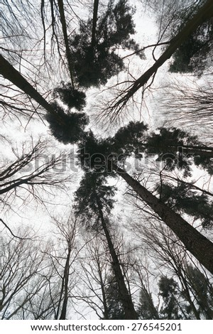 landscape of young grey forest with cloudy sky, nature series - stock photo