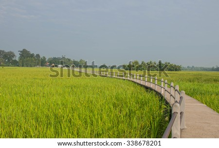 Landscape paddy rice fields with  beautiful sidewalk  bridge in the morning at  Khuangnai district , Ubon Ratchathani, Thailand, on October 22, 2015. Selective focus with shallow depth of field. - stock photo