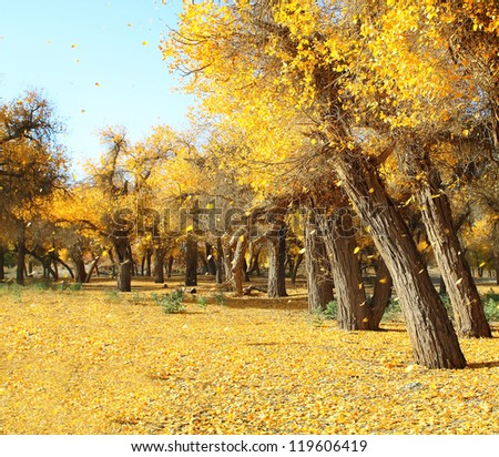 Landscape photo of golen fallen leaves and trees - stock photo