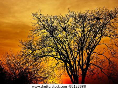Landscape photo of trees in sunset in deep autumn