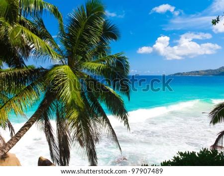 Landscape Shore Jungle - stock photo