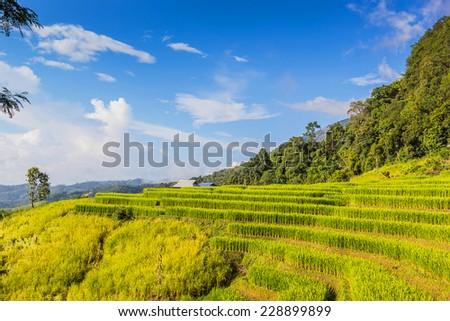 Landscape shot paddy field and beautiful sky. - stock photo