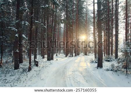 landscape snow trees dense forest in winter - stock photo