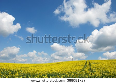 Landscape. Spring Landscape. Spring. Yellow flowering fields, nature spring landscape. Spring landscape background. - stock photo