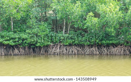 Landscape style picture of mangrove forest beside river that is source of marine animal food - stock photo