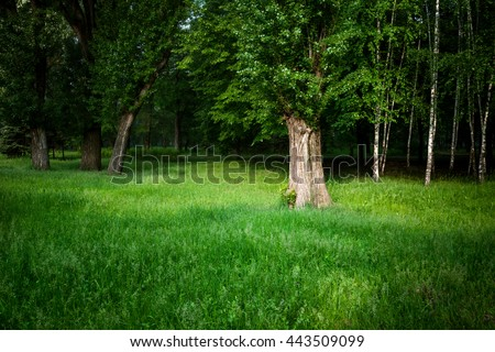 landscape. summer forest - stock photo