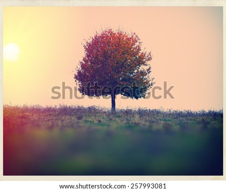 landscape sun and a lone tree in a field autumn season - stock photo