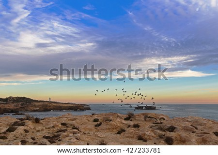 Landscape sunset view of Rock dove birds flying above rugged limestone coastline in the evening at Cape Dombey in Robe, South Australia.  - stock photo