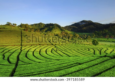 Landscape Tea Plantation location Rancabali Ciwidey West Java - stock photo