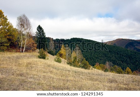 Landscape the forest - stock photo