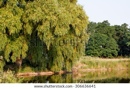 Landscape. The lake in the park - stock photo