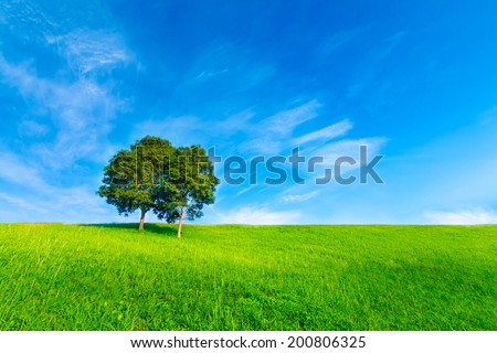 Landscape tree in clear green and blue nature - stock photo