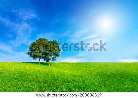 Landscape tree in clear green and blue nature and sun on blue sky - stock photo