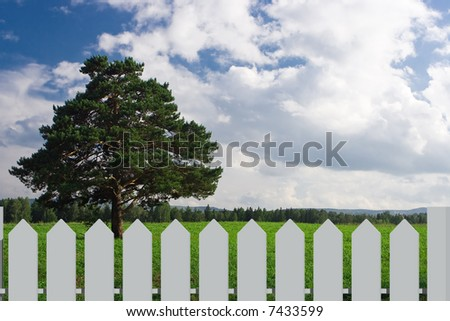 Landscape  tree on the field behind fence
