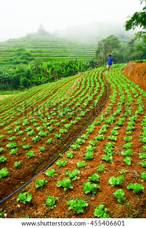 Landscape view of agriculture terrace field in Mon Jam Chaing Mai Thailand