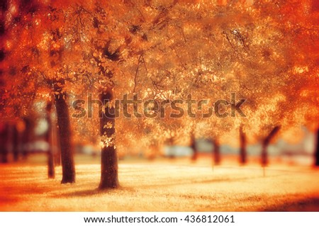 Landscape view of city autumn park with yellowed trees, soft focus and creative filter processing - autumn landscape with colorful autumn trees in sunny weather - stock photo