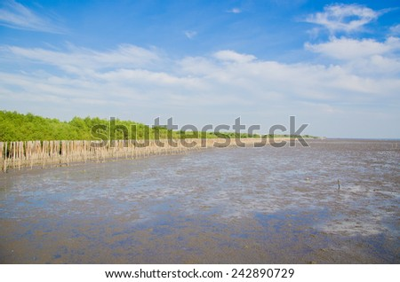 Landscape view of coastal mangrove forest - stock photo