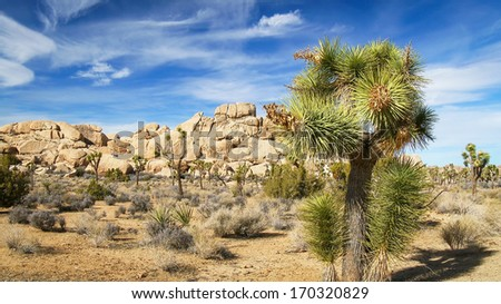 Landscape view of Joshua Tree National Park