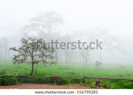 Landscape View of Siam Tulips Fields with Morning Mist  at Sai Thong National Park - Chaiyaphum Province Thailand