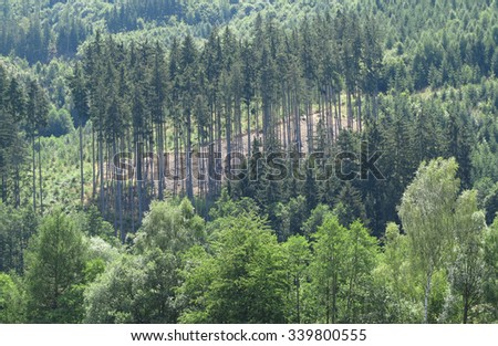 Landscape - view of the mixed forest